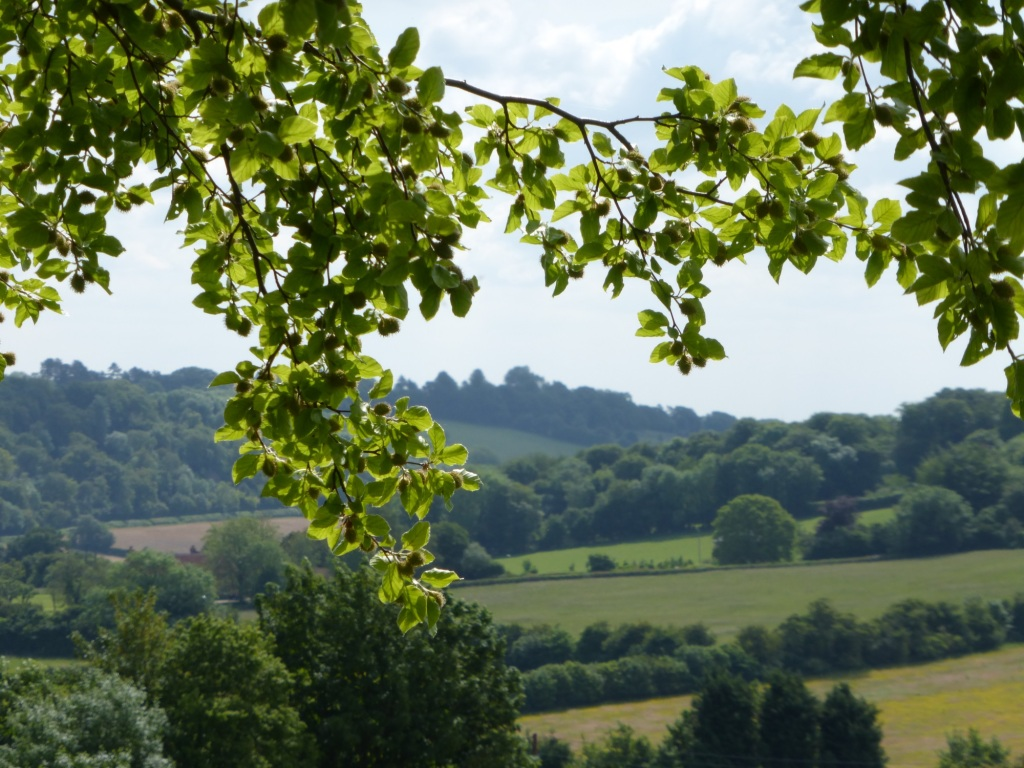 Chiltern hills countryside near author's house.